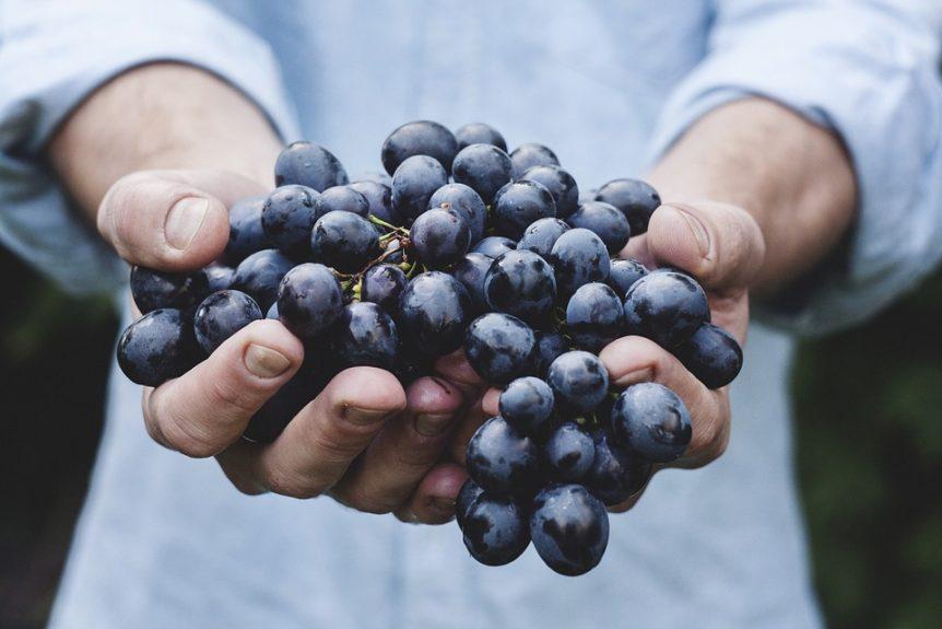 fruitarian detox