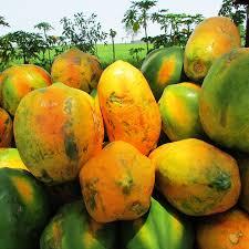 papaya fast