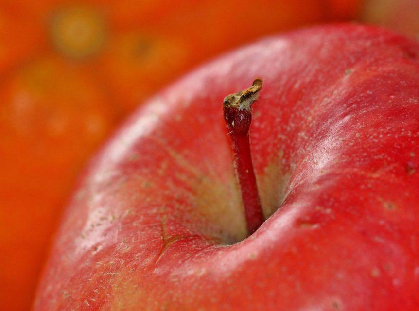fruitarianism fruitarian diet love