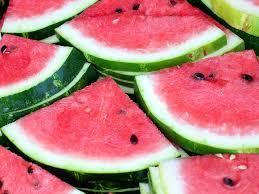 frugivore diet